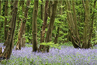 Heartwood Forest thumbnail